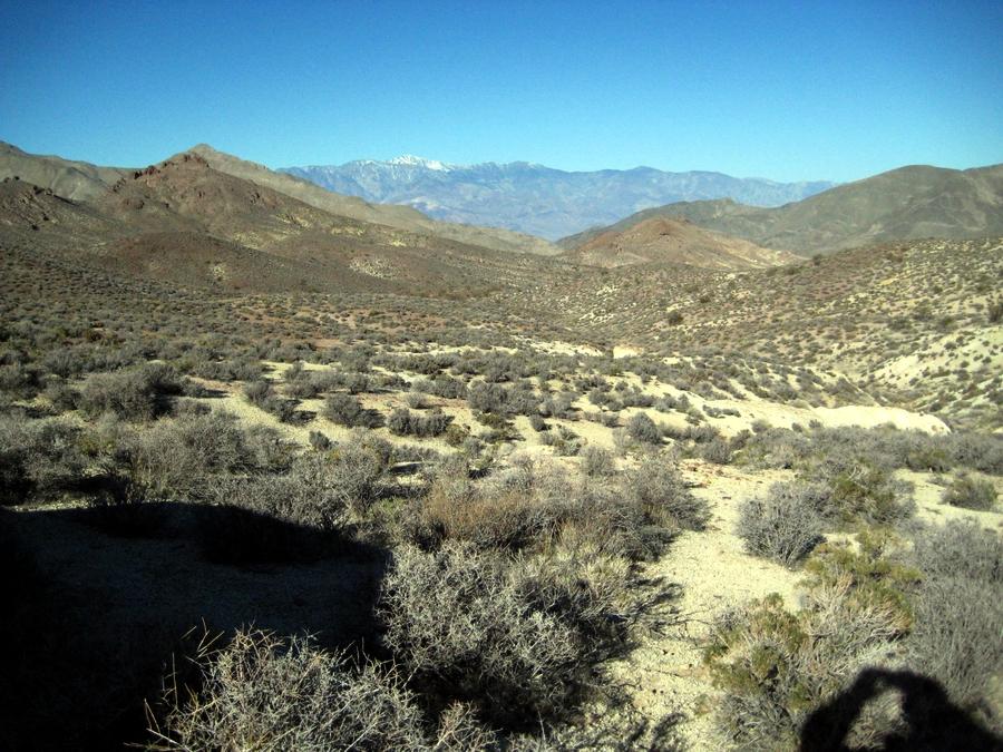 california chaparral