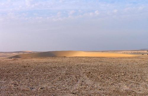 Растительный мир Аравийского полуострова. 2. ОАЭ, Катар, Оман: http://ukhtoma.ru/geobotany/asia02.htm