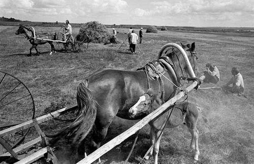 Как сделать грабли для лошади